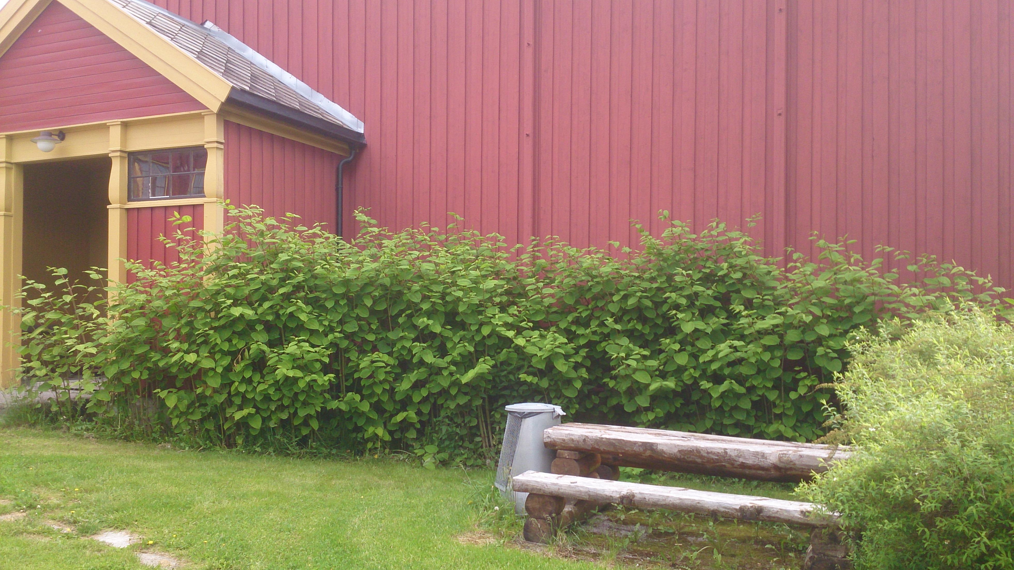 7d2fcb7c Slirekne ved Namdals folkehøgskole - Klikk for stort bilde